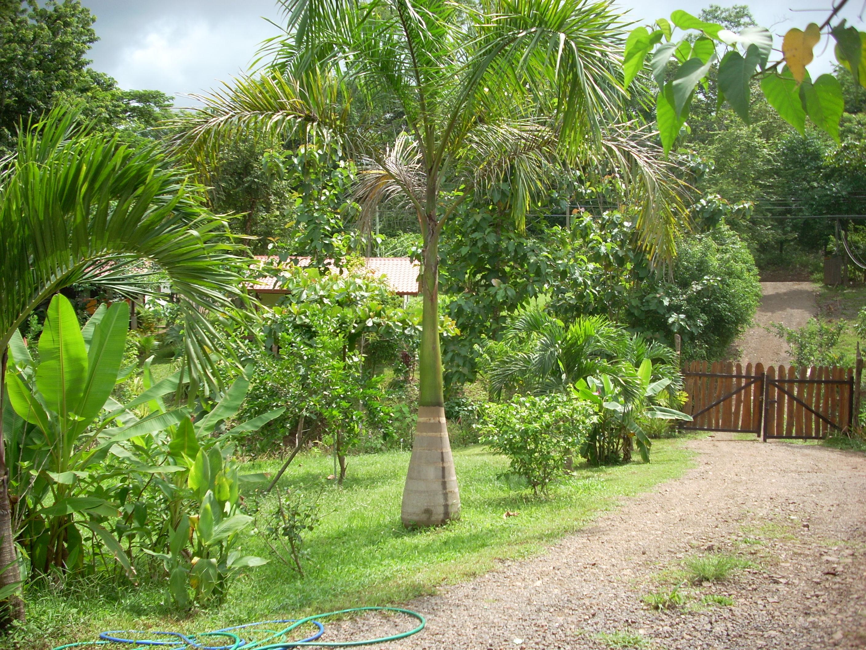 Sogno i caraibi portale vacanze a cuba colombia costa - Giardino tropicale ...